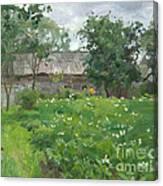 The Potato In Blossom Canvas Print