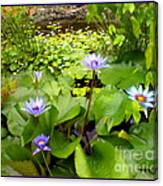 The Pretty Pond And Perfect Petals Canvas Print
