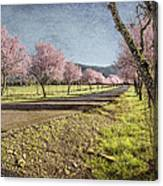 The Promise That Spring Makes Canvas Print