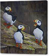 The Puffin Report Canvas Print