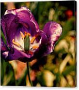The Purple Rose Of Cairo Canvas Print