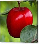 The Red Apple Canvas Print