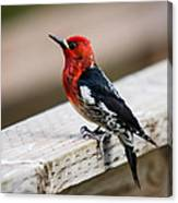 The Red Head Canvas Print