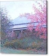 The Red Maple Tree Canvas Print