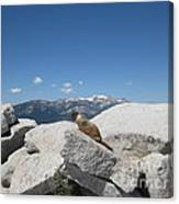 The Resident of Half Dome Canvas Print