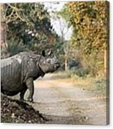 The Rhino At Kaziranga Canvas Print