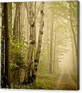 The Road Through The Woods Canvas Print