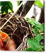 The Robins Nest Canvas Print
