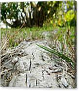 The Root Of Happiness Canvas Print