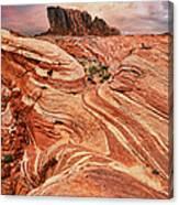The Sand Crawler Canvas Print