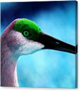 The Sandhilll Crane  Canvas Print