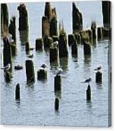 The Sea Gulls Canvas Print