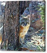 The Shy Fox Canvas Print