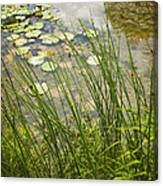 The Side Of The Lily Pond Canvas Print