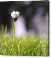 The Single Flower Canvas Print