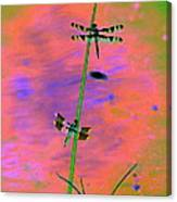 The Skimmer And The Whitetail Art #1 Canvas Print