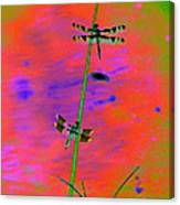 The Skimmer And The Whitetail Art #2 Canvas Print