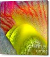 The Snapdragon - Flower Canvas Print