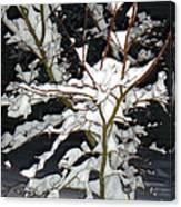 The Snowy Tree II Canvas Print