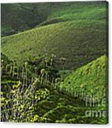 The Soft Hills Of Caizan Canvas Print