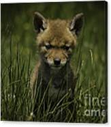 The Softer Side Of Nature Canvas Print