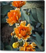The Softer Side Of The Cactus Canvas Print