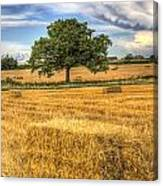The Solitary Farm Tree Canvas Print
