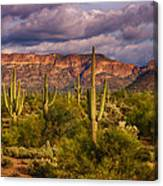 The Sonoran Golden Hour  Canvas Print