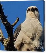 New Orleans  Southern Osprey Canvas Print