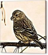 The Sparrow  Canvas Print
