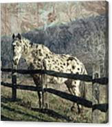 The Speckled Horse Canvas Print