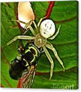 The Spider And The Fly  Canvas Print