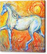 The Sun Horse Canvas Print