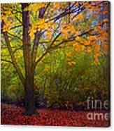 The Sunoka Tree Canvas Print