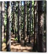 The Surreal Forest Canvas Print