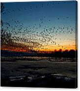 The Swarm Canvas Print