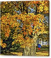 The Swinging Tree Canvas Print