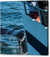 The Tail Of A Whale Right In Front Canvas Print