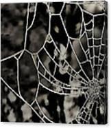 The Tangled Web Canvas Print