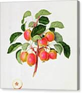 The Tartarian Crab Apple Canvas Print