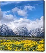 The Teton Mountain Range In The Spring Grand Teton National Park Canvas Print