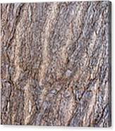 The Texture Of Wood Canvas Print