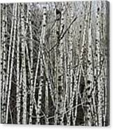 The Thicket Canvas Print
