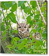 The Thoughtful Owl Canvas Print