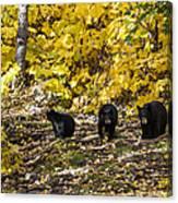 The Three Bears Canvas Print