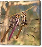 The Three Dragonflies  Canvas Print