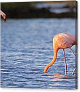 The Three Flamingos Canvas Print
