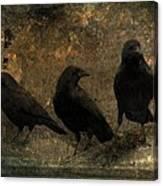 The Three Black Crows Canvas Print