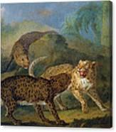 The Three Leopards Canvas Print
