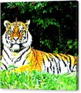 The Tiger In The Woods Canvas Print